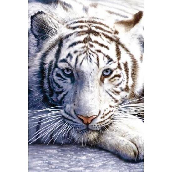 AlleKleurenShirts Fotografische poster witte tijger Woonaccessoires