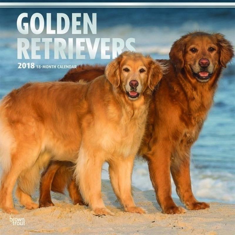 hond golden retriever tekening